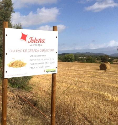 Cultivo de Isleña, Ibiza
